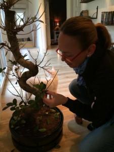 bonsai fikusviskare