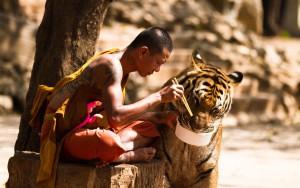 tempel tigrar